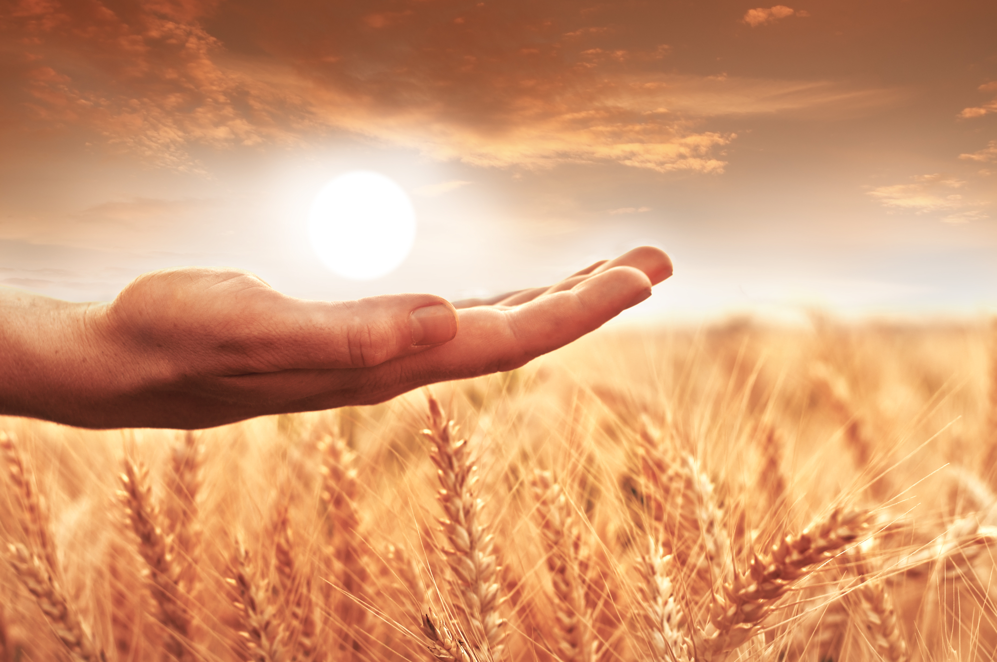 Woman's hand holding the sun over wheat field